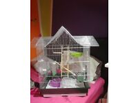 Cage for parrots ,Budgerigar
