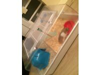 Small Syrian Hamster (cage, toys, food, etc included)