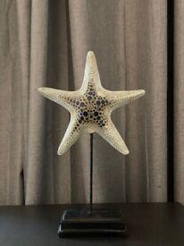 Art Decoration- Sea Star