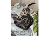 ADORABLE PLAYFUL KITTENS FOR SALE- ONE BOY AND ONE GIRL LEFT