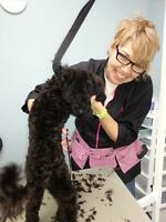 Dog and cat groomer