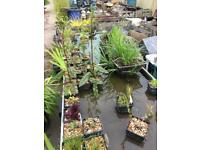 Pond supplies rocks fish and plants