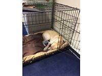 Extra Large Dog Crate with bed to fit