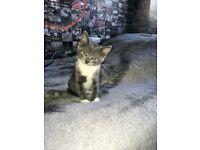 A gorgeous kitten called precious