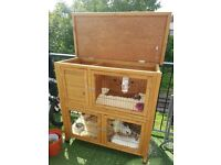 2 dwarf rabbits+double hutch GREAT PRICE
