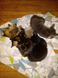 6 kittens looking for home