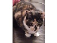 Please help find pepper missing since the 4/12/17 Nottage road area of Ely, urgent need of op.