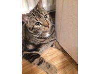 TABBY MALE CAT MISSING!