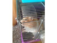White and brown hamster