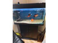 Jewl aquarium and stand