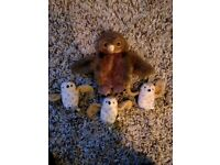 Puppet Company story telling owl babies puppets
