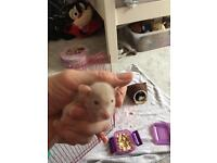 Adorable Baby Dumbo rats for sale