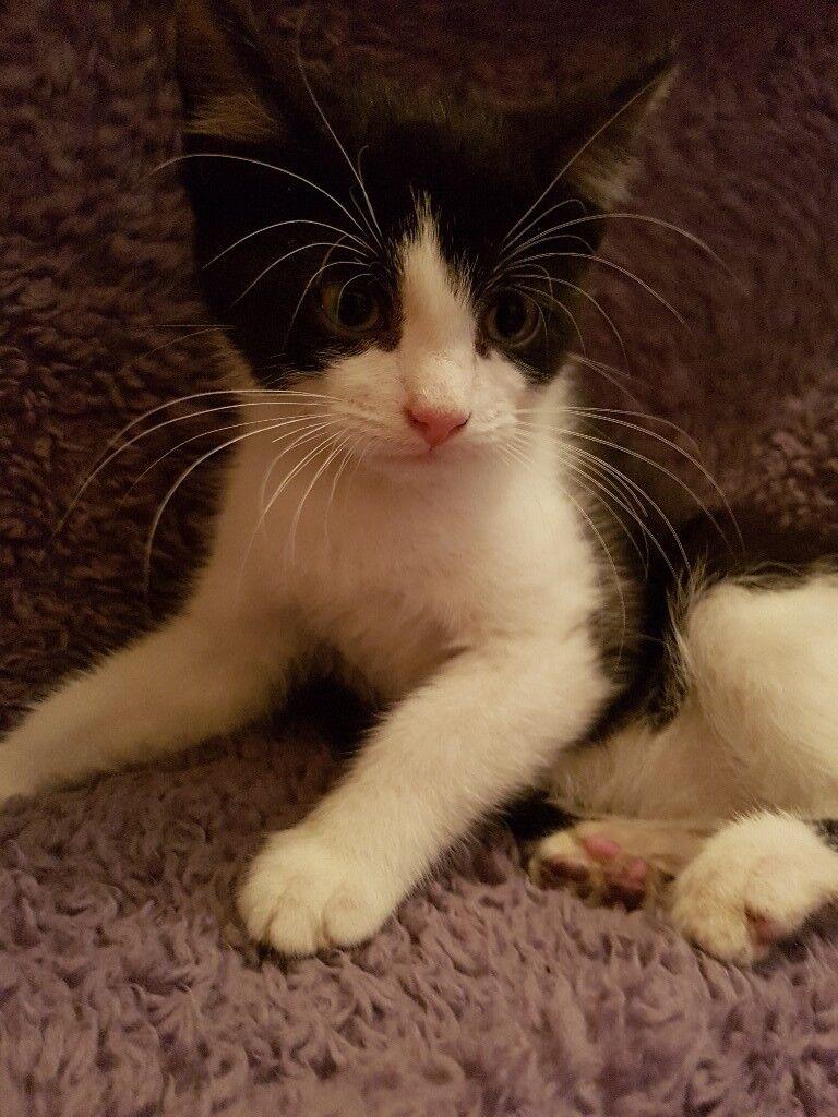 2 kittens forsale
