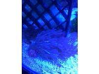 Various marine corals fr £5