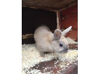 Small female rabbit 4 month old with hutch
