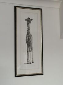 Young Giraffe Framed,Signed Limited Edition Print By Clive Meredith.