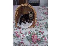 Wicker cat carrier