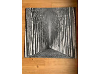 Large black and white trees print on canvas 90cm x 90cm