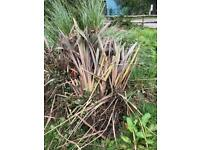 Large plants and pampers grass