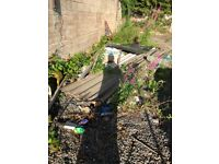 Tin /metal sheeting / roofing free to a good home -