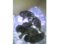 kitten for sale look for forever homes