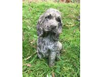Stone spaniel dog