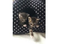 Pair of beautiful kittens. boy & girl. Ready to re-home