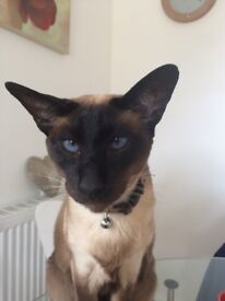 Looking to rehome my Seal Point Siamese female. Loving home required. 10yrs old. In good health.