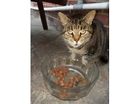 Loving cat free to good home
