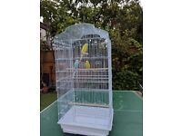 Three Budgies and large cage