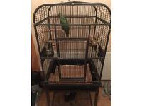 Alexandrine parrot with large cage
