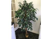 Large 5' faux Fiscus Tree