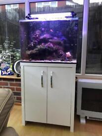 Fish tank & white gloss cabinet