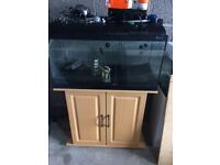 Tropical fish tank full set up (can deliver today)