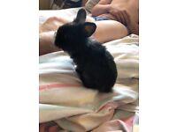 Last baby rabbit from litter!