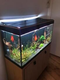 Fish tank set up discus 200 liters bargain