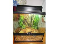 complete exo-terra vivarium & male & female crested gecko