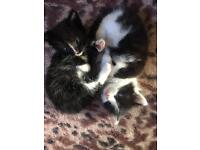 3 male kittens, 1 female (ready to leave)