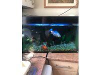 Fish with aquarium
