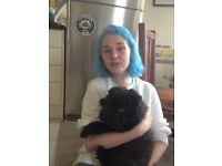 Izzy's Dog Emporium