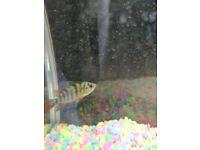 Cichlids and catfish