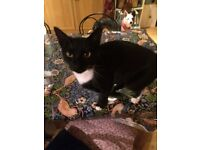 Lost cat. Lost on 25th November eh7