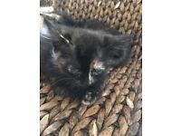 Adorable last kitten