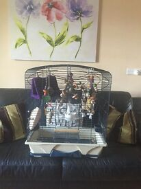 Bird/Parrot cage for sale