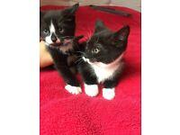 4 Lovely kittens!!!