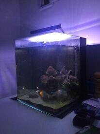 Nanospace 16L aquarium with 6 fish