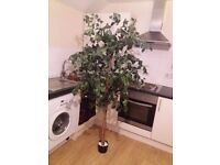 Free standing tree to go in your living room or even office