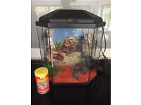 Second hand, fish tank, £45