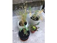 FREE neglected outdoor plants