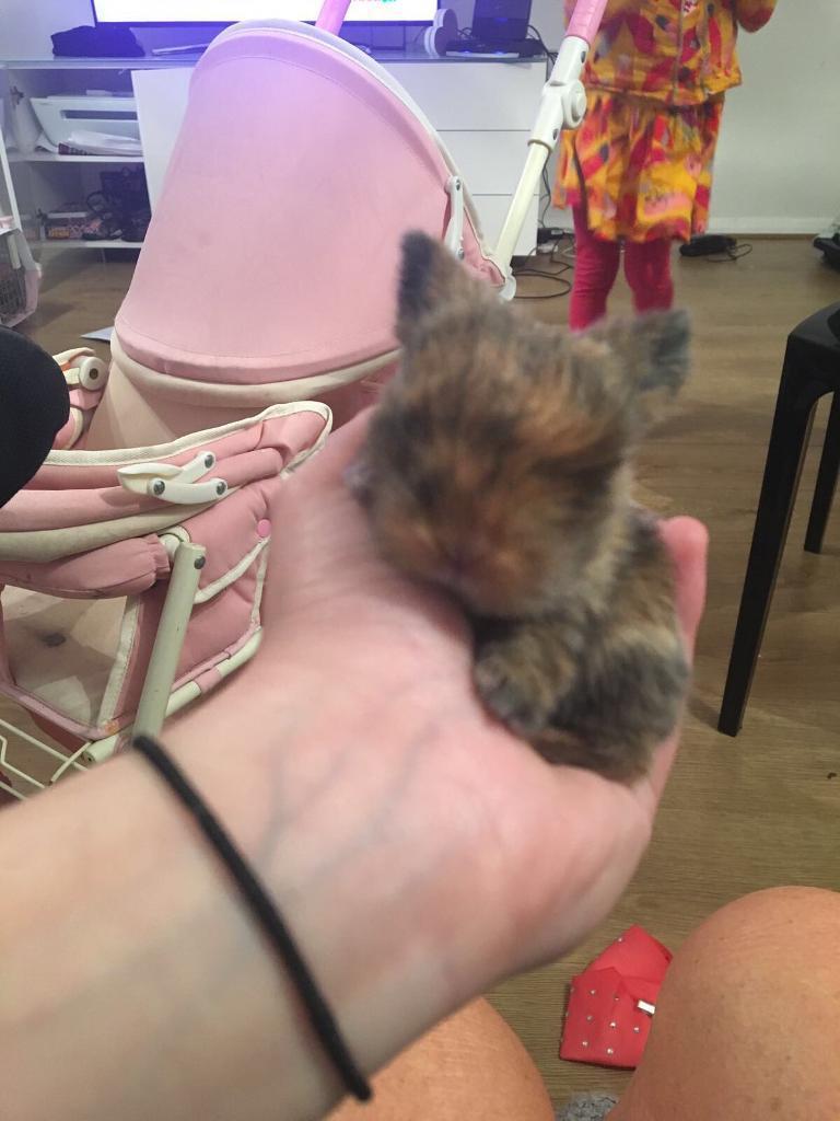 Brindle baby bunny